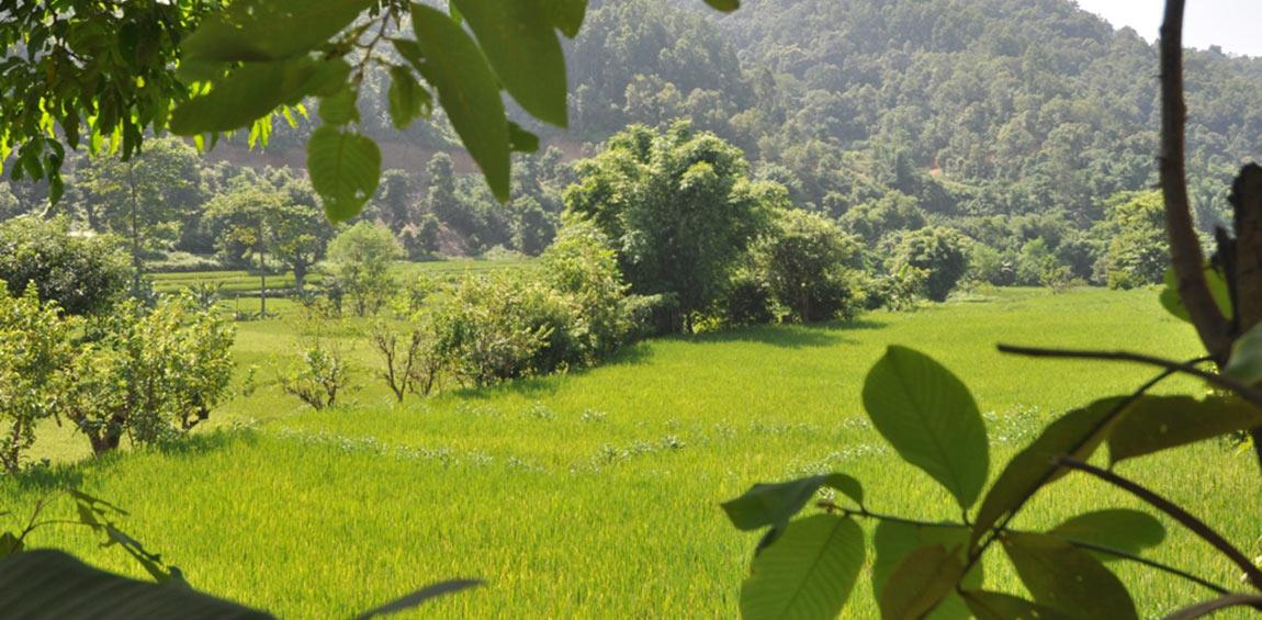 खाद्यान्न बालीमा आत्मनिर्भरता